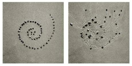 """Snail Drawing: Spiral Start #9,"" a diptych by Dan Ranalli."